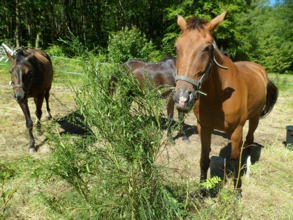 Sympa une balade à cheval