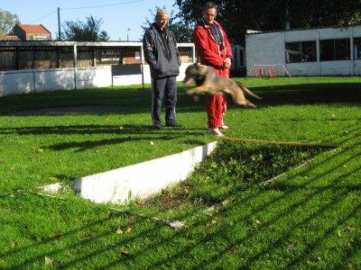 Farah de la plate fosse  entrainement aux sauts en ring Belge