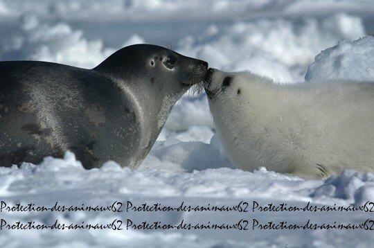 ● Défendre les animaux