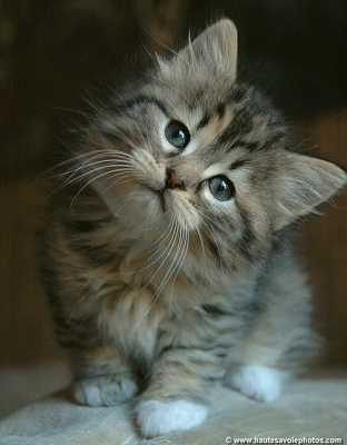 J'adore les chates
