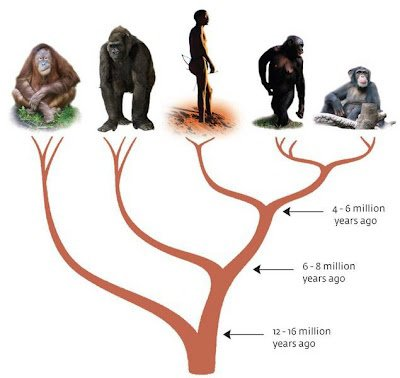 human is the product of an evolution..so why there is monkeys?
