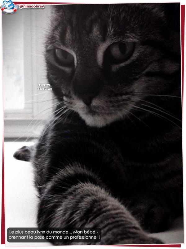 NINA'S CAT!!