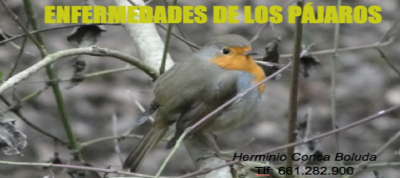 BLOG ENFERMEDADES DE LOS PAJAROS