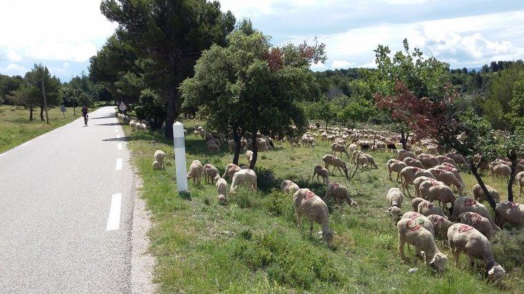 07/06/2018 amas de laine... à la Madeleine