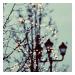 - ρeut-on fαire comme si les αvions dαns le ciel, lα nuit étαient des étoiles filαntes ? (2010)