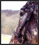Photo de Kiowa-MagicHorse