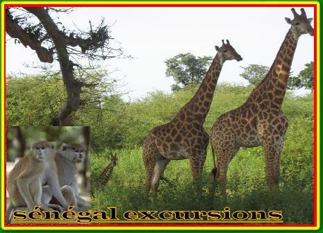 EXCURSIONS SENEGAL