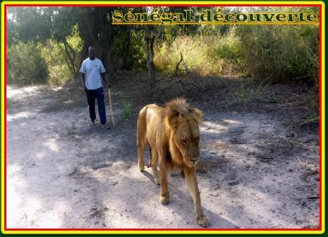 Tourisme - GUIDE LOCAL Somone,Saly,Ngaparou,Mbour ...