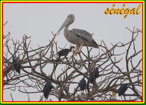EXCURSIONS SENEGAL...