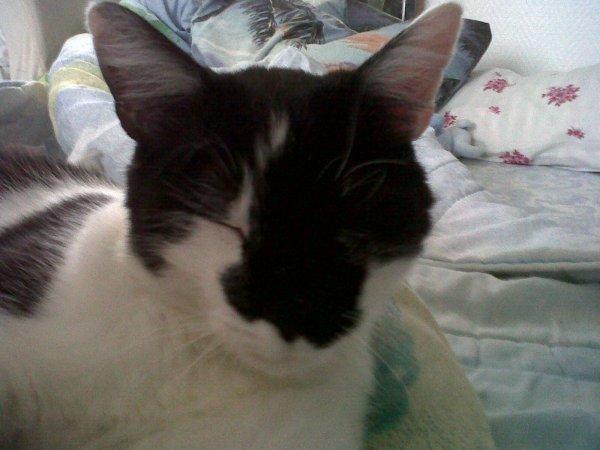Mon petit chat Miou alias Salem