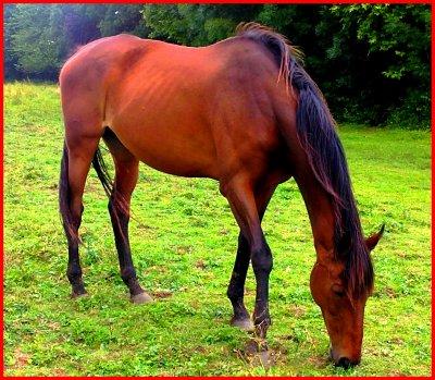 Il n'y a pas de mauvais chevaux, il n'y a que des mauvais cavaliers.
