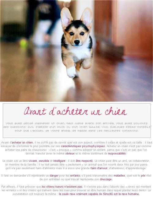 Conseil # Avant d'acheter un chien