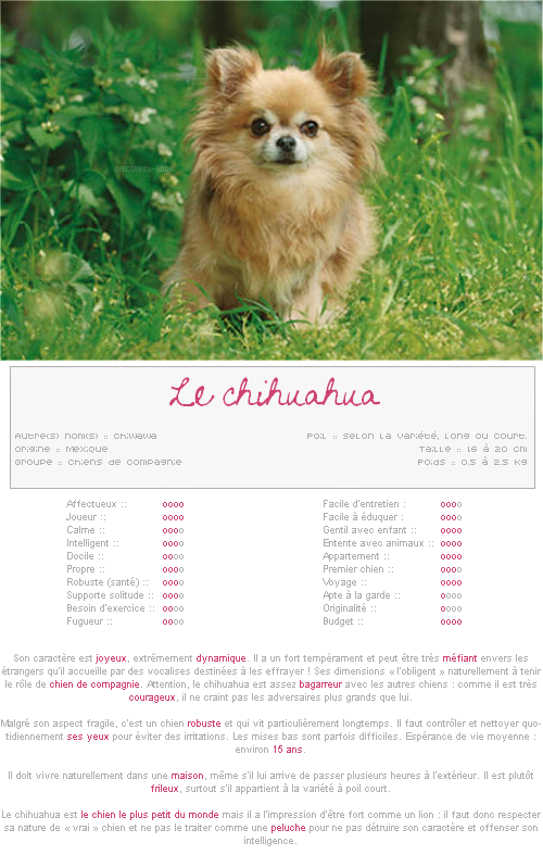 Race # Le chihuahua