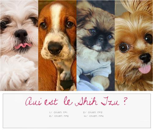 Quiz # Quiz photo