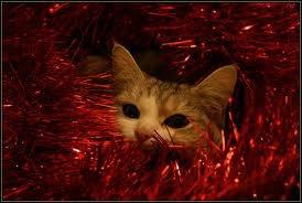 Vive les cadeaux de Noël !!