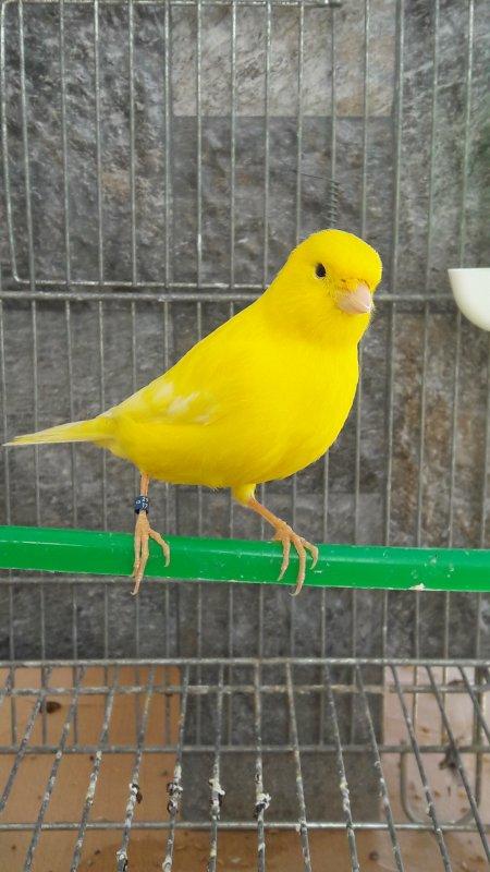 Jeune lipo jaune intensif 2017 - sujet selectionnè pour le concours national
