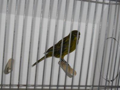 Kampioen TT vogelvrienden Sneek