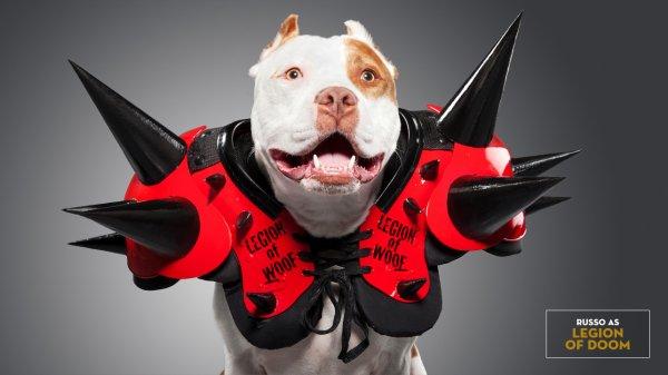 Quand les chiens se prenne pour les superstars de la wwe