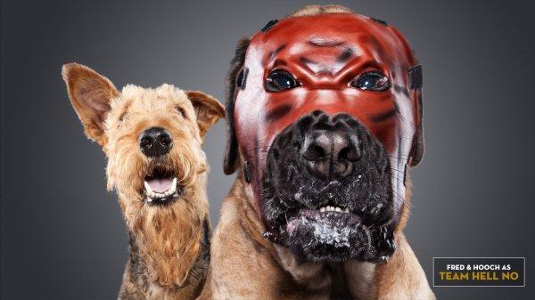 Quand les chiens se prenne pour les superstars de la wwebriti (2)