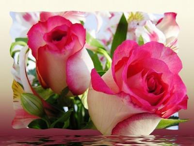 Des Belle Fleur La Vie C Est L Amour
