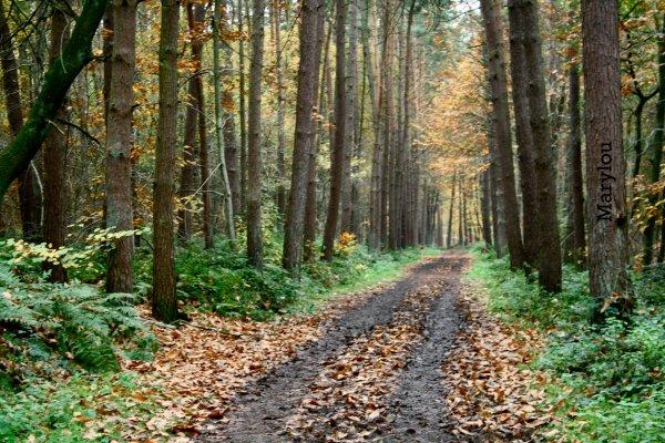 C'est l'automne ! :)