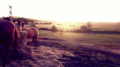 Avec les chevaux au coucher de soleil