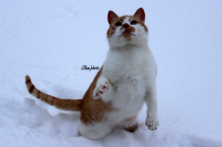 Article 58 : Petit chat dans la neige ♥