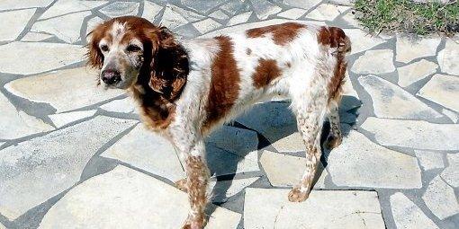 Hérault : La petite chienne laissée pour morte se porte bien