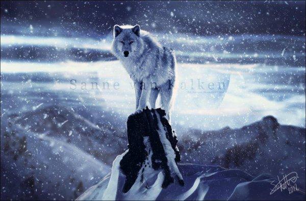 J'aime les Loups, J'aime les Chiens !
