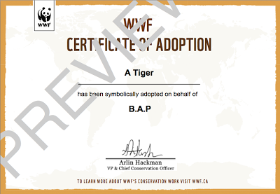 Project Tiger Adoption With The Wwf Blog De Daewons