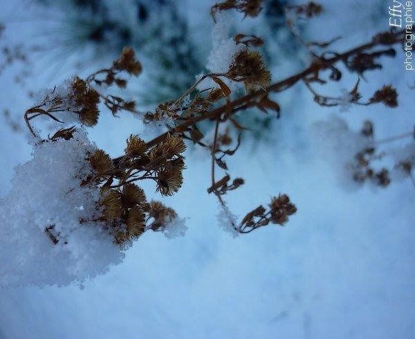 « La neige ne brise jamais la branche du saule. »