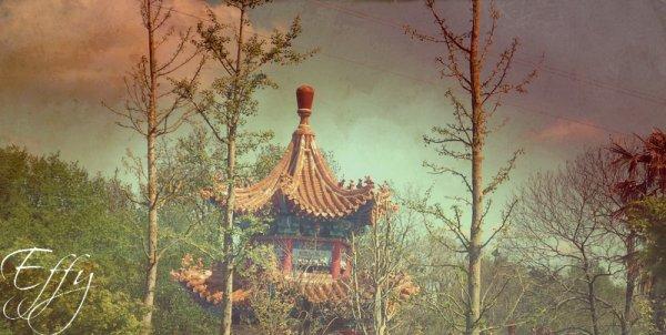 Chine au zoo de Beauval