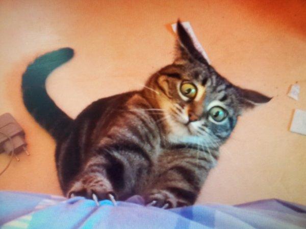 Mon chat est histérique = )