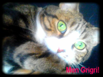 Gribouille ; Mon Gros Chat! ♥