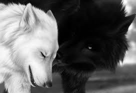 I roar silently - Chapitre 1 ♥