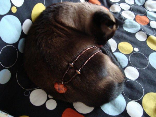 bijoux aux couleurs du siamois !!!