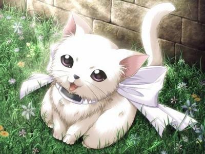 petites photos d'animaux version manga^^
