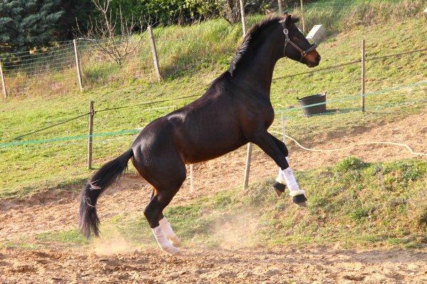 Comment évacuer le trop plein d'énergie de son cheval tout en faisant de jolies photos ?