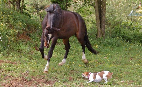 Le cheval, le remède contre le stress des exams
