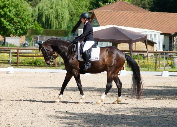 Dressage à Réaumont 1ère partie : Amateur 2 préliminaire