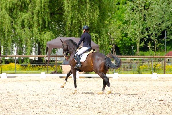 Dressage à Réaumont 2e partie : Amateur 2 Grand Prix