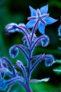 La petite plante