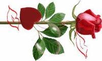 Mon cher amour,