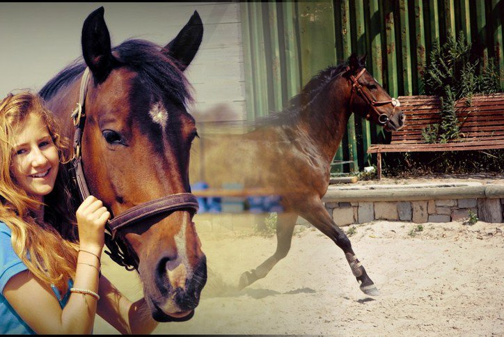 « même que moi, mon poney c'est un champion. »