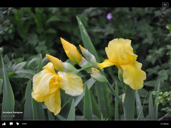 Une jolie fleur ......