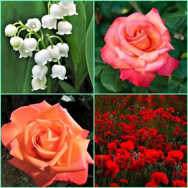 Les plus belles fleurs du printemps sont là - Bonne fin de semaine Bisous