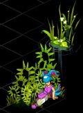 Bug de dofus ( Sol noir ) Plutôt jolie, dirais-je ! :)