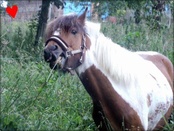 Poney qui a de l'herbe égale poney heureux !