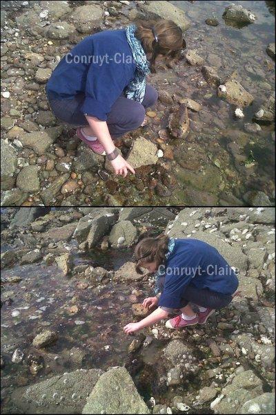 Peche aux crabes