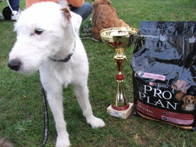 18 septembre 2011 : concours agility Saint Dizier